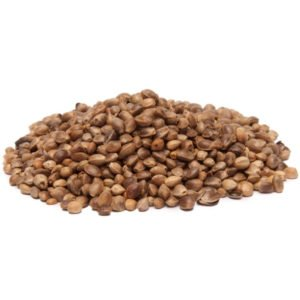industrial hemp seed